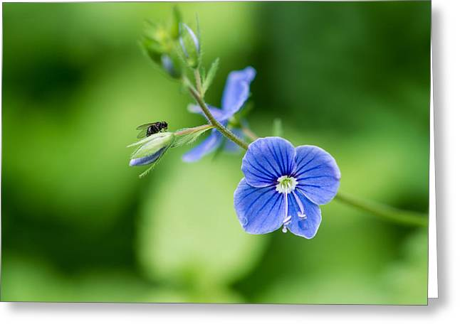 A Flower And A Fly - Featured 3 Greeting Card