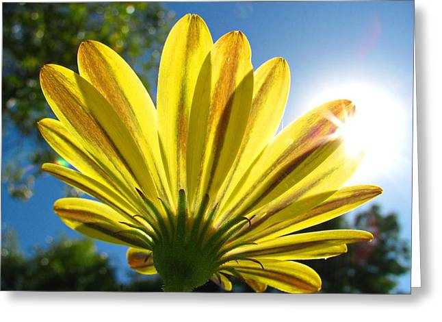 A Flower In The Garden Greeting Card by Sergio Diaz
