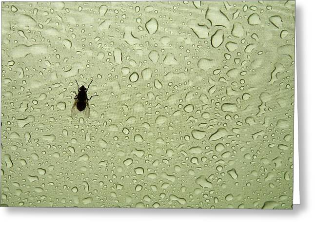A Fly Takes Shelter Greeting Card by Ashley Cooper