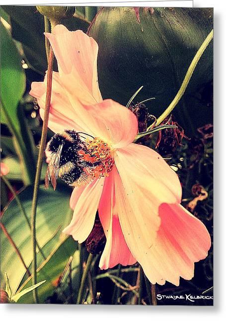 A Foraging Bee Greeting Card by Stwayne Keubrick