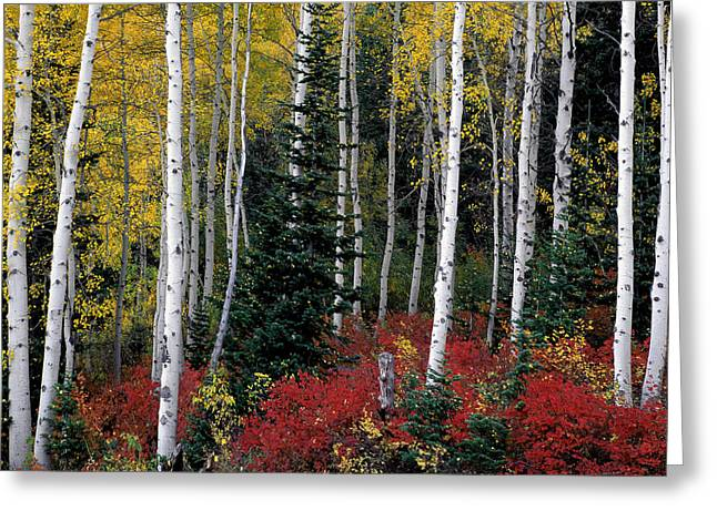 A Forest Of Color Greeting Card