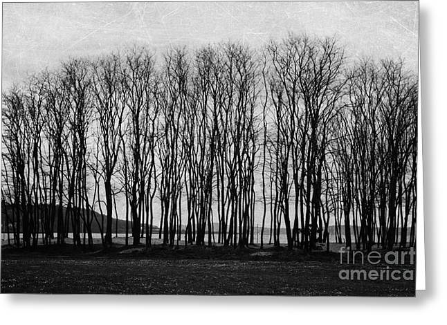 A Forest Of Trees Greeting Card by Sylvia Cook