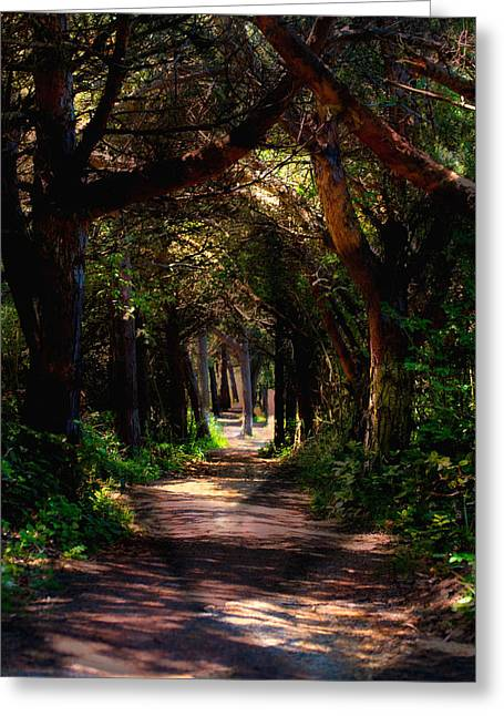 A Forest Path -dungeness Spit - Sequim Washington Greeting Card
