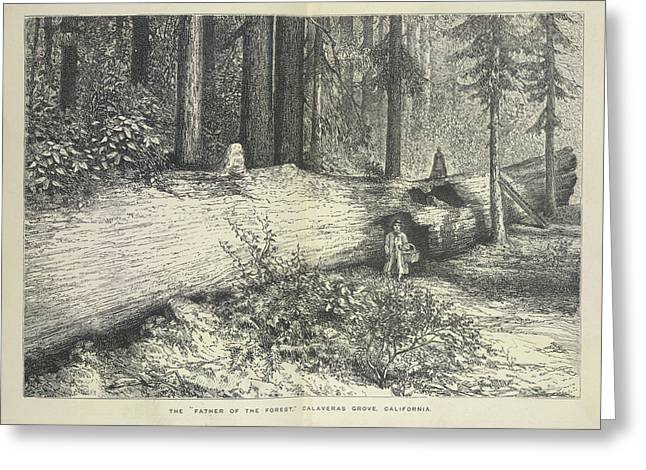 A Forest Scene Greeting Card