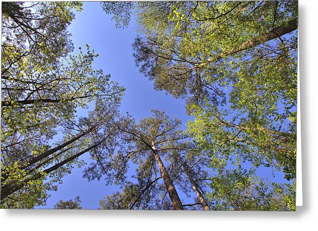 A Forest Sky Greeting Card by Gordon Elwell