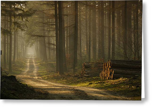 A Forest Walk Greeting Card by Jan Paul Kraaij
