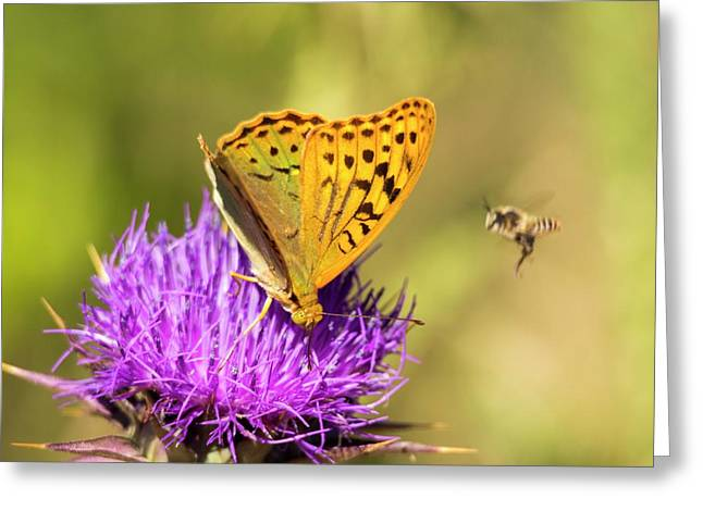 A Fritillary Butterfly Greeting Card