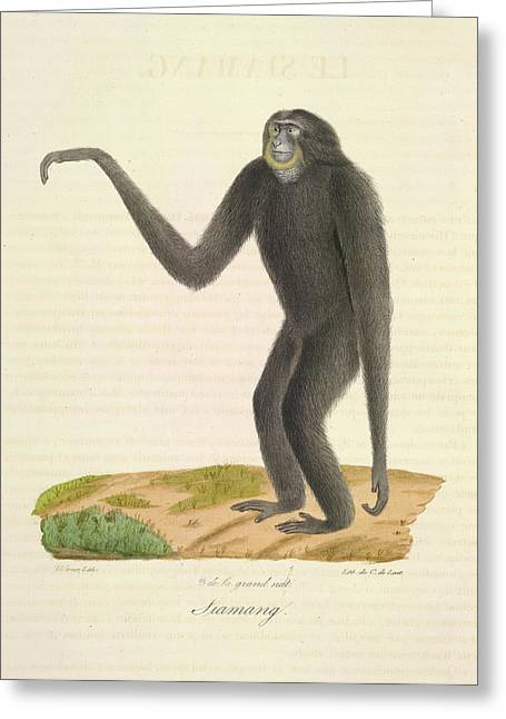 A Furred Gibbon Greeting Card by British Library
