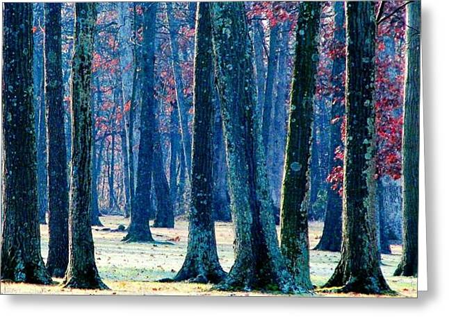 Greeting Card featuring the photograph A Gathering Of Trees by Angela Davies
