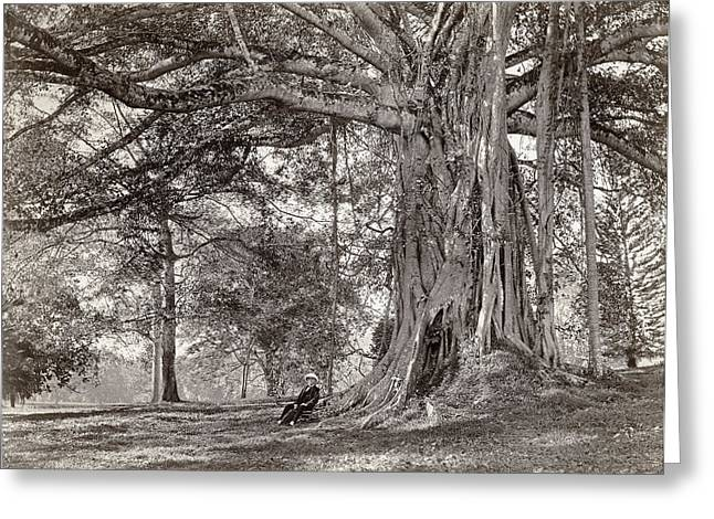 A Gentleman Sitting Beneath A Large Native Tree In British Ceylon Greeting Card by Scowen and Co