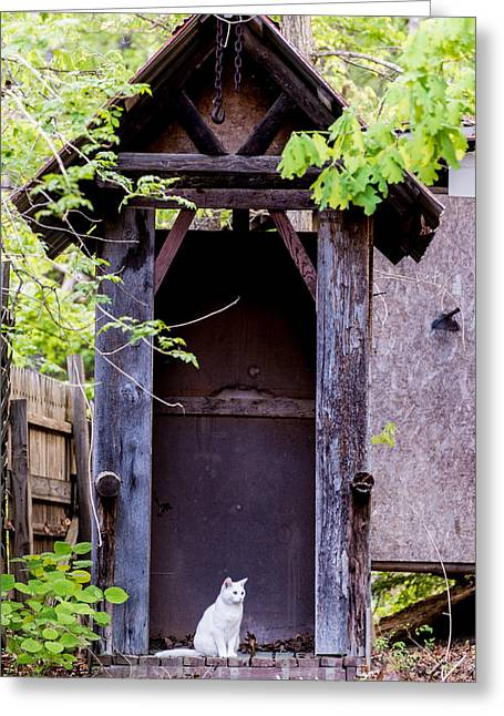 A Ghost In The Potting Shed Greeting Card by John Carroll