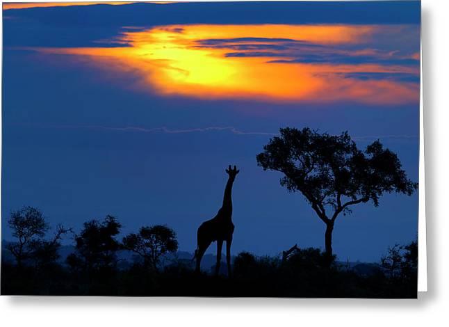 A Giraffe At Sunset Greeting Card