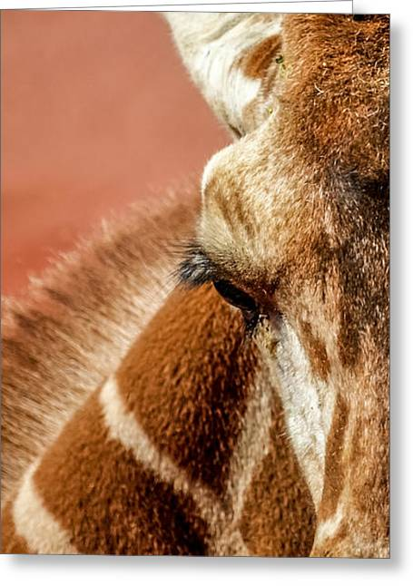 A Giraffe Greeting Card