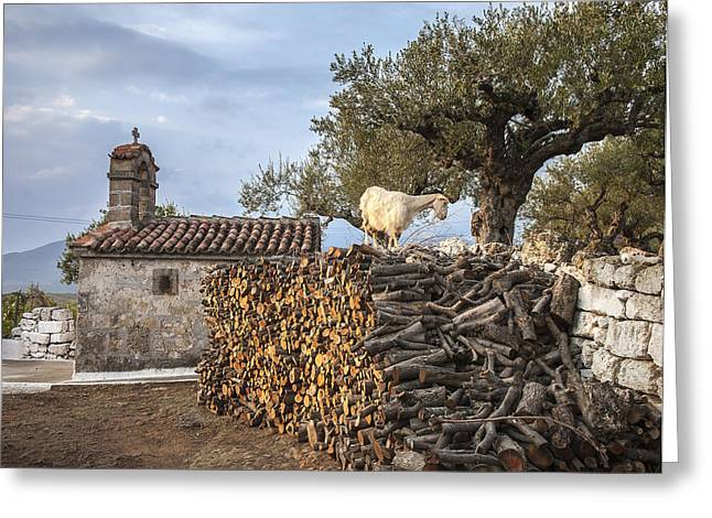A Goat On The Woodpile Greeting Card by Peter Eastland