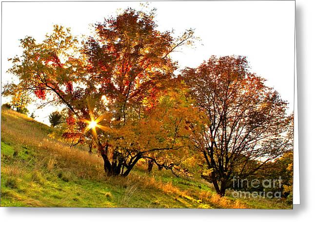 A Golden Glowing Autumn Sunset Greeting Card by Jay Nodianos