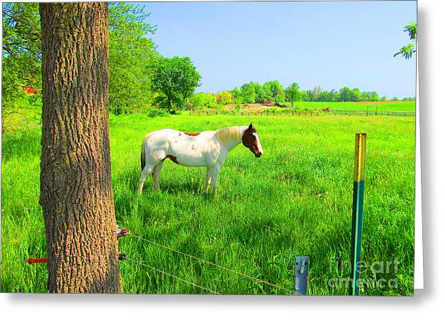 A Good Place To Roam Around Greeting Card by Tina M Wenger