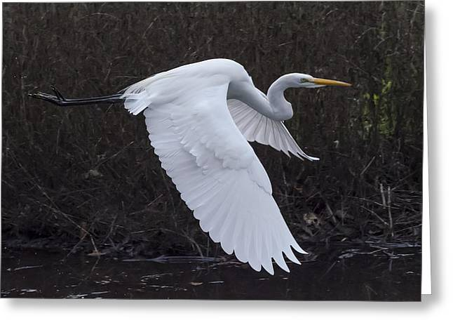 A Great Egret Takes Wing Greeting Card by Bruce Frye