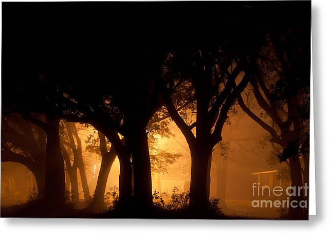 A Grove Of Trees Surrounded By Fog And Golden Light Greeting Card