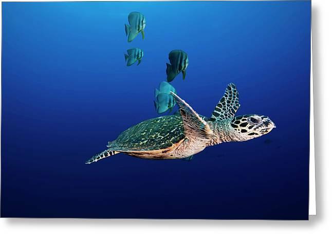 A Hawksbill Sea Turtle And Batfish Swim Greeting Card