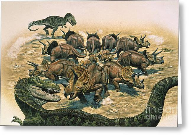 A Herd Of Triceratops Defend Greeting Card by Mark Hallett