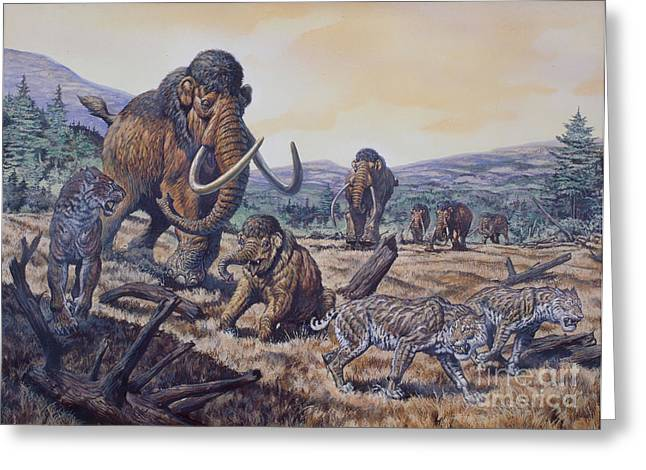 A Herd Of Woolly Mammoth And Scimitar Greeting Card by Mark Hallett