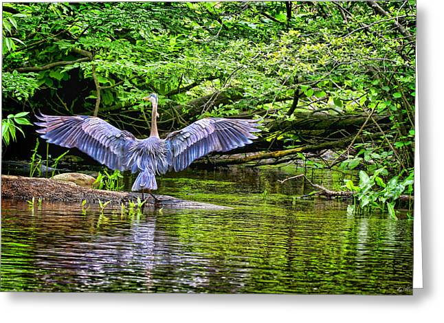 Greeting Card featuring the photograph A Heron Touches Down by Eleanor Abramson