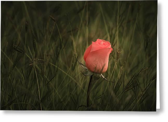 A Hidden Gem Greeting Card by Tin Lung Chao