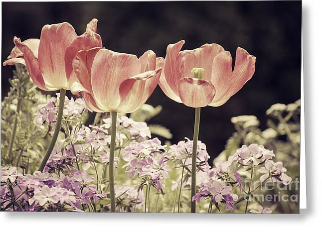 A Hint Of Blush Greeting Card by Emily Kay