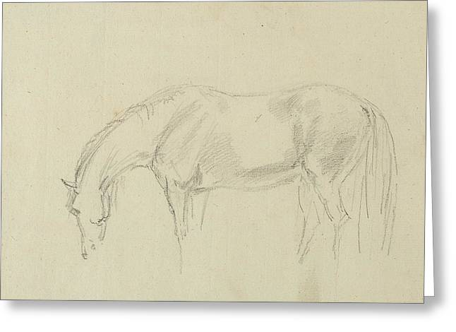 A Horse Grazing  Greeting Card
