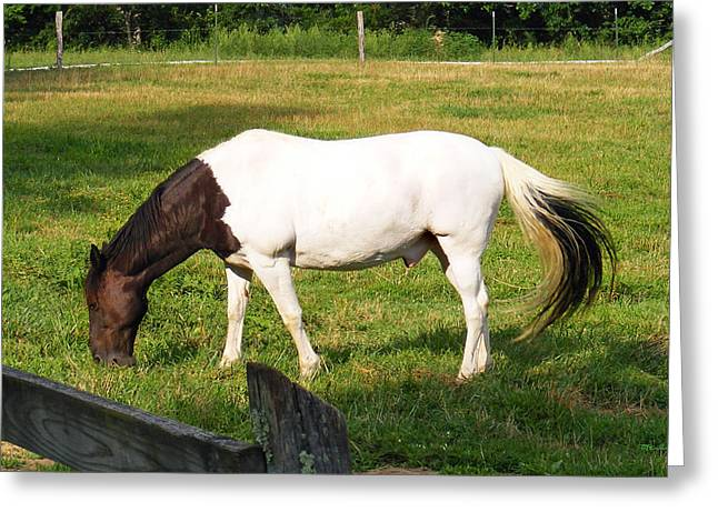 A Horse Named Dipstick Greeting Card