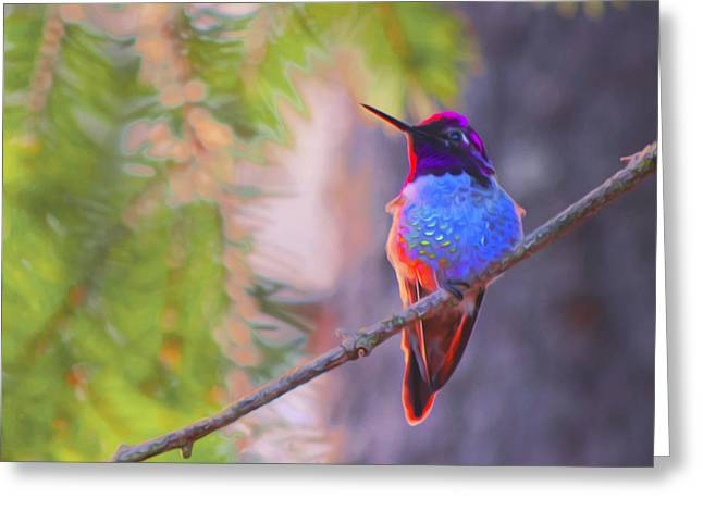 A Hummingbird Resting In The Evening Light. Greeting Card
