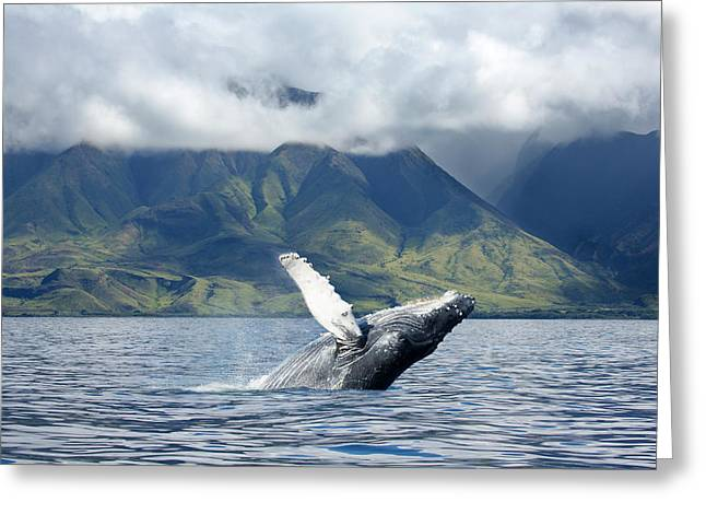 A Humpback Whale  Megaptera Greeting Card