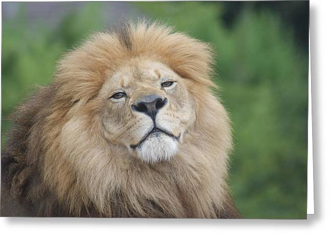 A King's Smile Greeting Card by Leigh Ann Hartsfield