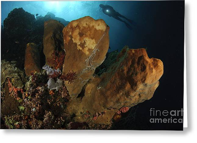 A Large Sponge With Diver Greeting Card by Steve Jones