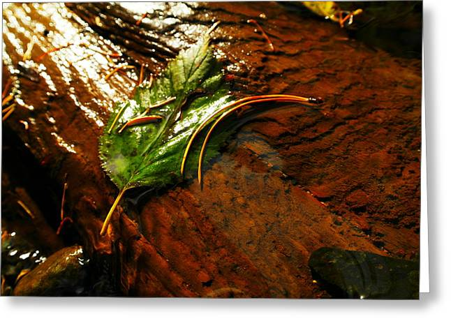 A Leaf Washed Over Greeting Card by Jeff Swan