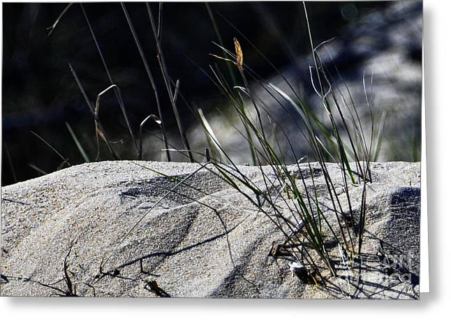 Greeting Card featuring the photograph A Light Spring Breeze by Gerlinde Keating - Galleria GK Keating Associates Inc
