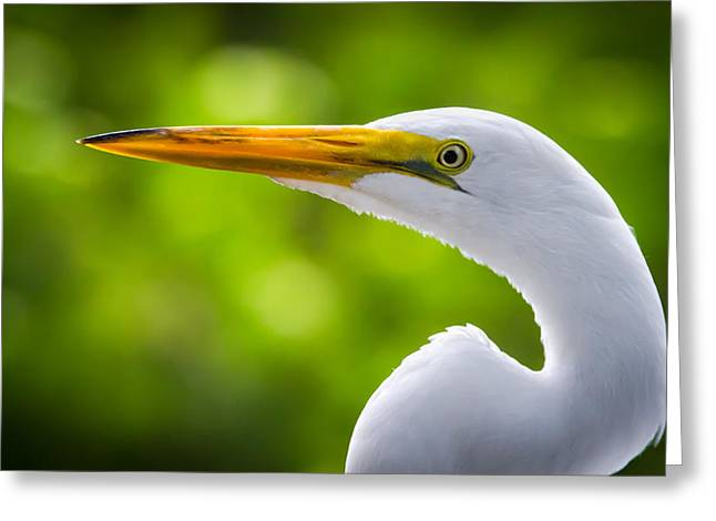 A Lighter Version Of A Snowy Egret Greeting Card by Andres Leon