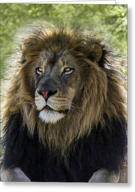 A Lion's Thoughts Greeting Card