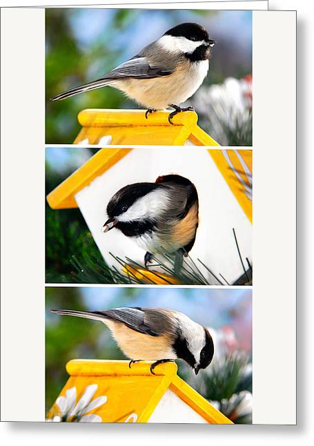 A Little Bird Told Me - Three Chickadees Triptych Greeting Card