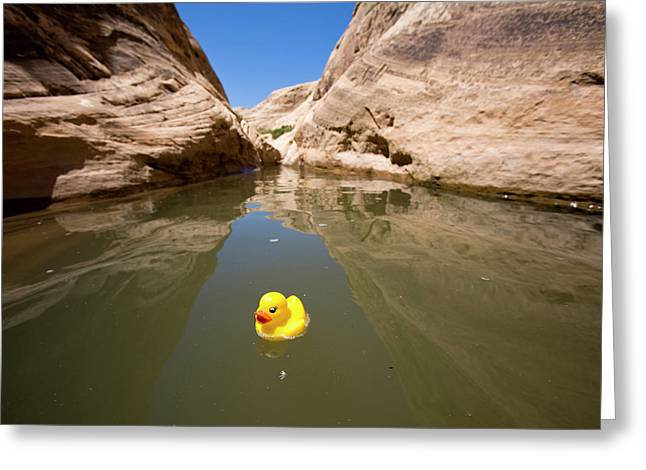 Rubber Duck Greeting Cards (Page #3 of 11) | Fine Art America