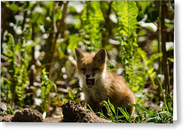 A Little Tired Greeting Card by Gary Wightman