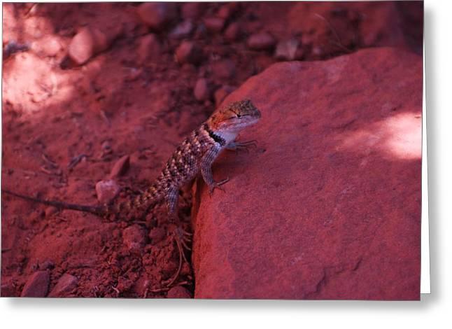 A Lizard Gazes From A Rock Greeting Card by Jeff Swan