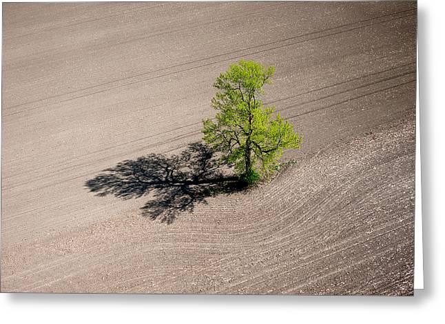 A Lone Tree In A Newly Seeded Corn Field. Richmond Ontario Dairy Farm. Greeting Card