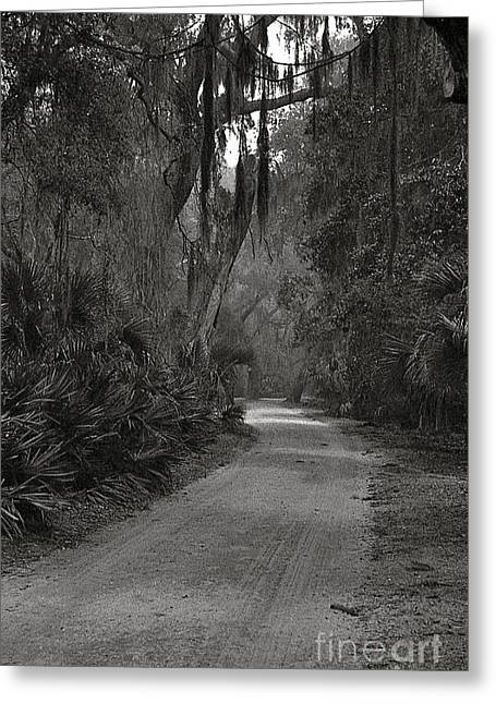 A Lonely Road Greeting Card by Debbie Bailey