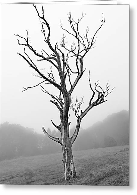 A Lonely Tree Greeting Card by Matt Jones