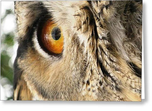 Greeting Card featuring the photograph Bubo Bubo- Eurasian Eagle Owl. Close Up. by Ausra Huntington nee Paulauskaite