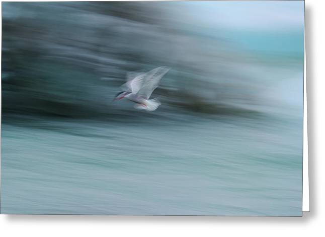 A Long Exposure Of An Arctic Tern Greeting Card by Keith Ladzinski