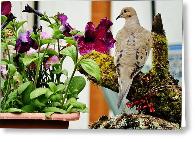 Greeting Card featuring the photograph A Lovely Morning by VLee Watson
