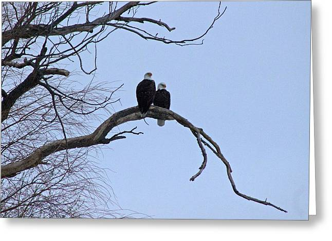 A Majestic Pair Greeting Card by Rhonda Humphreys