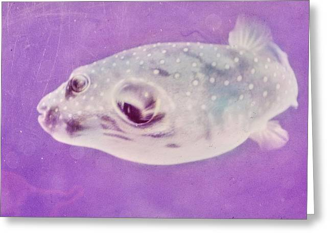 A Makimaki Fish Greeting Card by Horst P. Horst